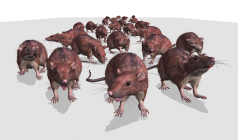 Hazards Posed by Rodent Infestations