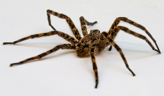 How to Control and Get Rid of Spiders In and Around Your Home?
