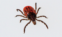 15 Interesting Facts About Ticks