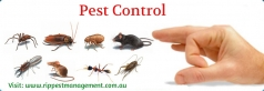 Some Safe Tips To Control Pests Around Your Home