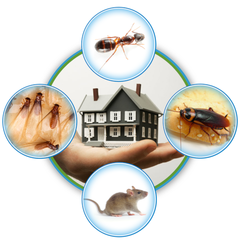 How to Avoid Pest Problems In Summer?