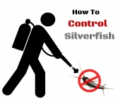 Silverfish - How to Control Them Naturally?