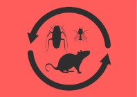 Pests That You Can Expect During Winter