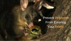 Prevent Possums From Entering Your Home