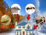 Pests That Invade Homes In Autumn & Winter