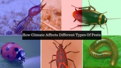 How Climate Affects Different Types Of Pests