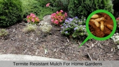 Termite Resistant Mulch For Home Gardens
