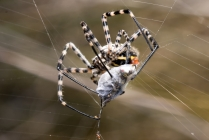 What Attracts Spiders To Your Home?