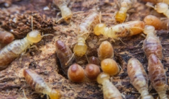 6 Important Things You Should Know About Termites