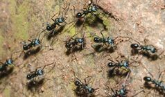 How To Eradicate Ants From Your House? Some Home-Made Tips For You