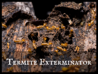 Do Termites Actually Make Any Noise? Can Humans Hear Them?