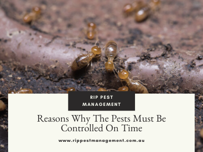 Reasons Why The Pests Must Be Controlled On Time