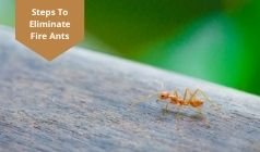 The Steps to Eliminate Fire Ants From Your Property