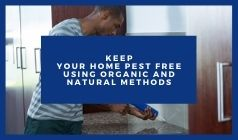 How Can You Keep Your Home Pest Free Using Organic and Natural Methods