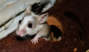 Rodents - How to Keep Them At Bay?