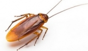 Interesting Facts About Cockroaches