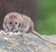Why is Pest Control Important Even in Winter?