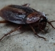 A Brief Note on Smart Tips and Tricks to Control Pest Infestation