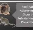 Roof Rats: Appearance, Signs of Infestation and Prevention