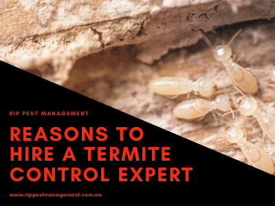 What Are The Reasons To Hire A Termite Control Expert?