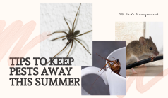 5 Tips To Keep Pests Away This Summer