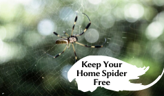 9 Effective Ways to Keep Your Home Spider Free