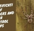 Facts, Identification of Spiders and their Control Steps
