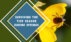 A Detailed Guide On Surviving the Tick Season During Springs