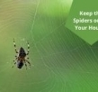 What Should You Do To Keep the Spiders out of Your House?