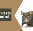 5 Rat Pests Control Myths You Must Never Believe