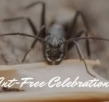 How Can You Have Ant-Free Celebrations?