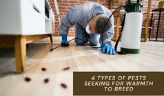4 Types Of Pests Seeking For Warmth to Breed